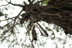 树根在天空中 免版税图库摄影