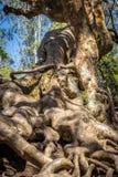 树根深入地球 库存图片