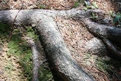 树根源夏天 自然本底 免版税图库摄影