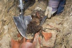 树根源完全地填装的老赤土陶器下水道线 库存照片