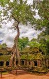 树根源生长在大厦于废墟Ta Prohm,一部分的高棉寺庙复合体 免版税库存照片