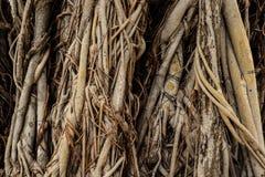 树根 库存图片
