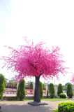 树桃红色花 库存照片