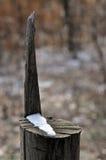 树桩作为日规 免版税图库摄影