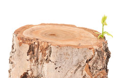 树桩 库存照片