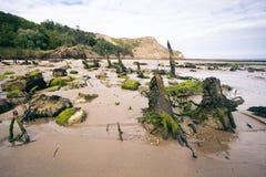 树桩和岩石在海滩 库存照片