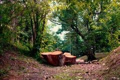 树桩和树在森林里 免版税库存照片