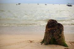 树桩和海滩 免版税库存照片