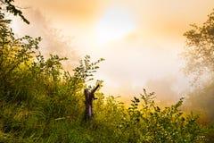 树桩和灌木在有薄雾的黎明 免版税库存照片