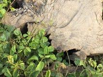 树桩和草与晚上光 免版税库存图片