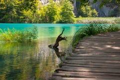 树桩和道路在Plitvice湖 库存照片