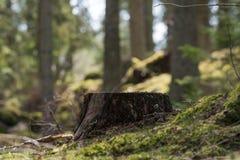 树桩在一个绿色森林里 库存图片
