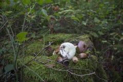 树桩在森林用绿色青苔完全地盖,在树桩橡子,蘑菇 库存照片