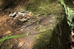 树桩在森林里 图库摄影