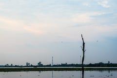树桩在莲花湖 库存照片
