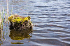 树桩在水中 图库摄影