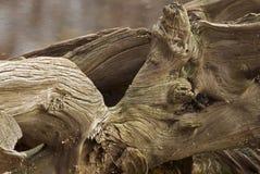 树桩木头 免版税图库摄影