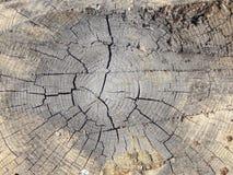树桩木头纹理 免版税库存图片