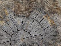 树桩木头纹理 免版税库存照片