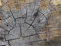 树桩木头纹理 图库摄影