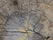 树桩木头纹理 库存图片