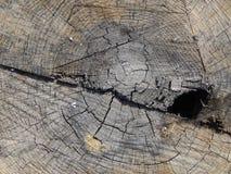 树桩木头纹理 库存照片
