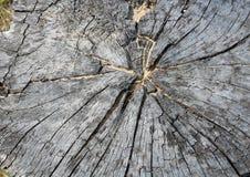 树桩本质上的木 免版税库存图片