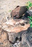 树桩树植物 图库摄影