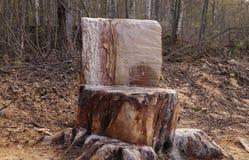 树桩椅子在森林里 库存图片