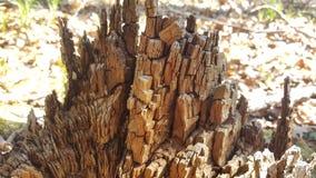 树桩烂掉木头 库存照片