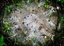 从树桩的蠕虫孔 图库摄影
