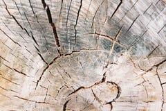树桩纹理背景 Slise,被削减的树结构 grunge 免版税库存照片