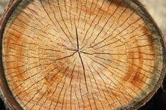 树桩纹理 被锯的木材木头背景 库存照片