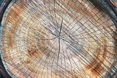 树桩纹理 被锯的木材木头背景 库存图片