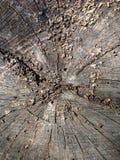树桩纹理 免版税图库摄影