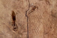 树桩纹理 库存图片