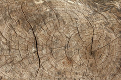 树桩纹理 免版税库存图片