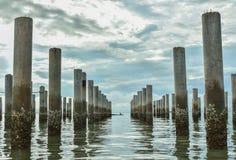 树桩线在海滩风景的 库存图片