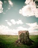 树桩结构树 免版税图库摄影