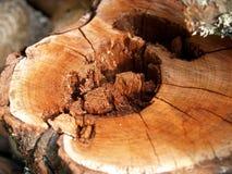 树桩结构树 免版税库存图片
