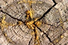 树桩结构树 库存照片