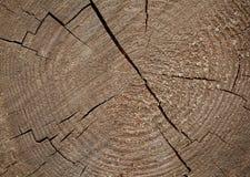 树桩背景本质上 免版税库存图片