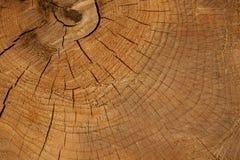 树桩背景本质上 图库摄影