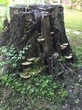 树桩蘑菇 免版税库存照片