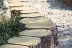 树桩行  图库摄影
