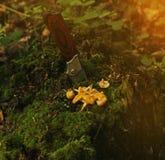 树桩被困住的刀子和谎言在裁减旁边采蘑菇 免版税库存照片