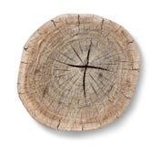 树桩顶部树型视图 库存图片