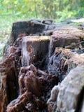 树桩 免版税库存照片