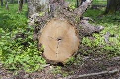 树桩 免版税图库摄影