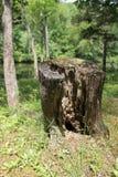 树桩 图库摄影
